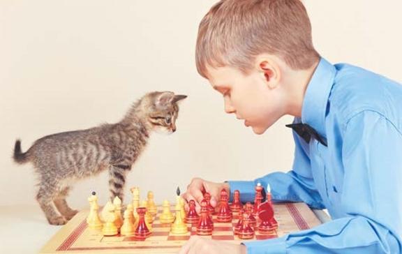 Интеллектуальные игрушки с кошкой