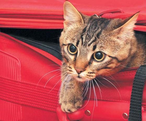 кошка в дороге