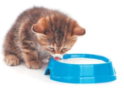 кошка ест