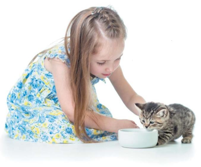 котенок ест