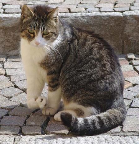 кошка с разрывом связок