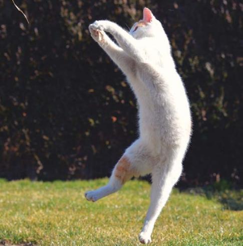 гибкая кошка