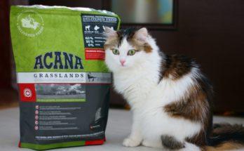 Витамины и минералы для кошки