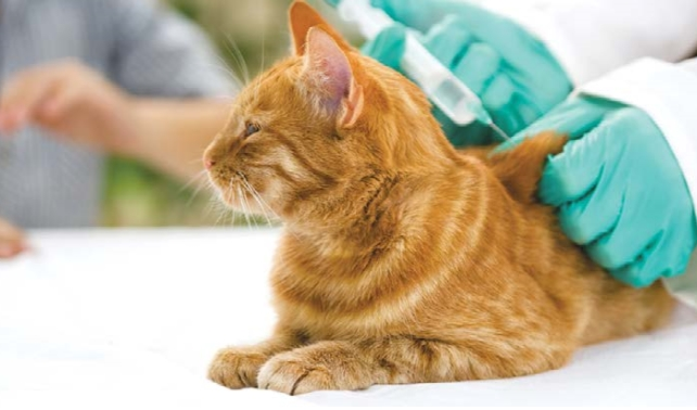 кошке делают укол