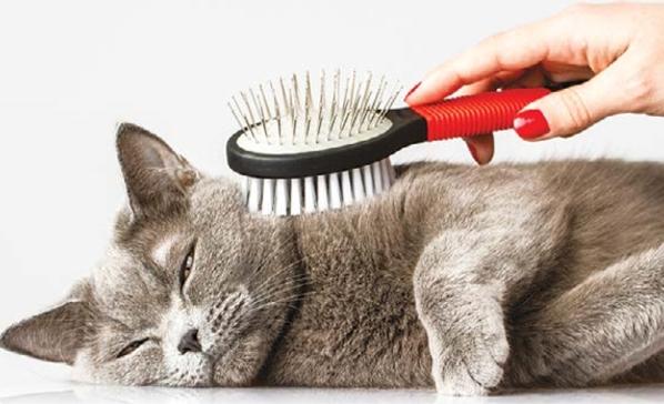кошку расчесывают