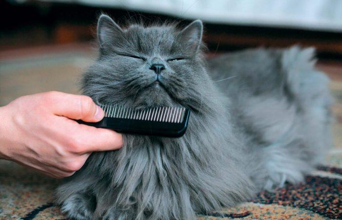 Гигиенические процедуры для кошки