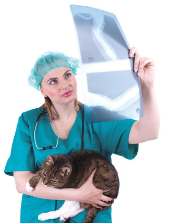 ренген кошки