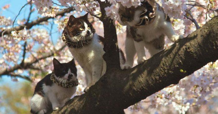 коты весной