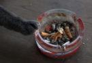 Коты – пассивные курильщики