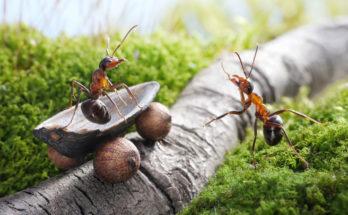 умные муравьи