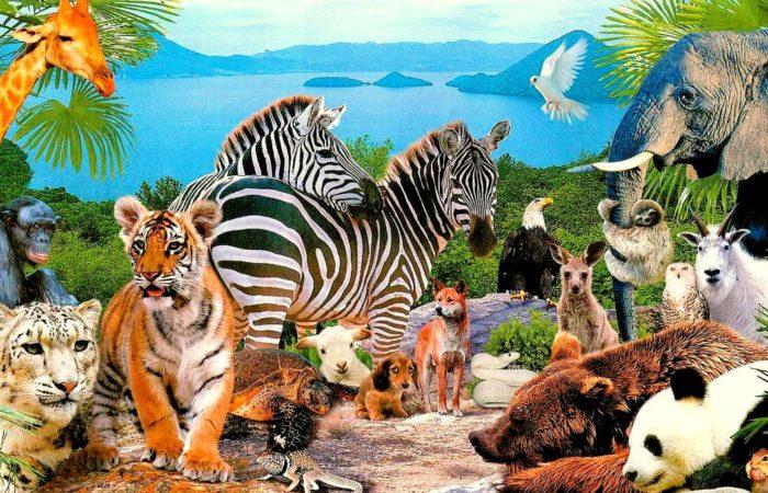 Млекопитающие Евразии