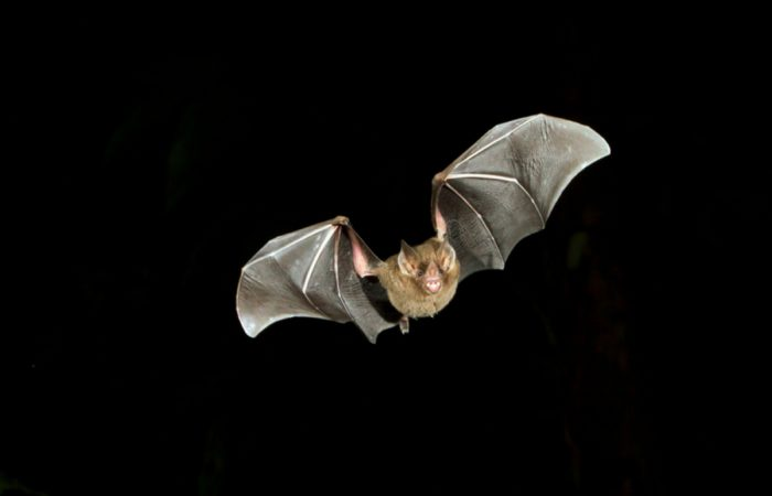 Как летучие мыши ориентируются в темноте
