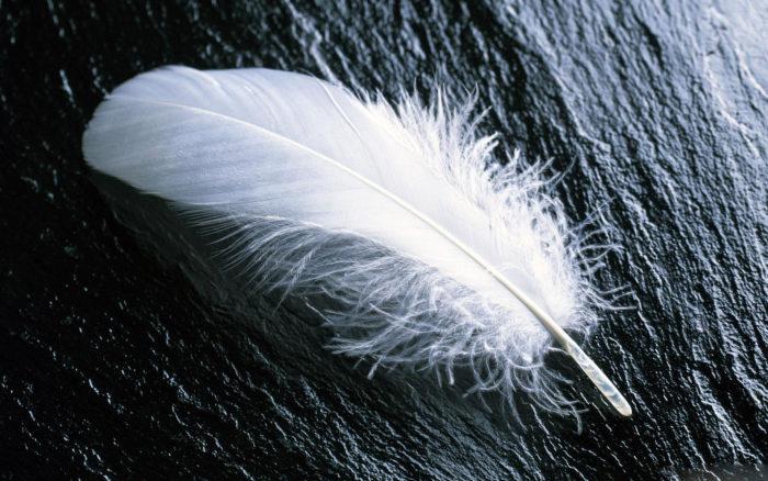 Птичье перо