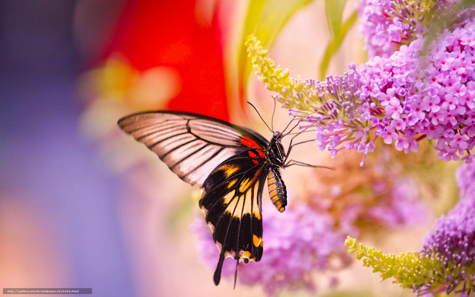 Обои мир бабочек, красота, цветок. Макро foto 11