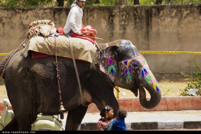 Как приручали азиатского слона