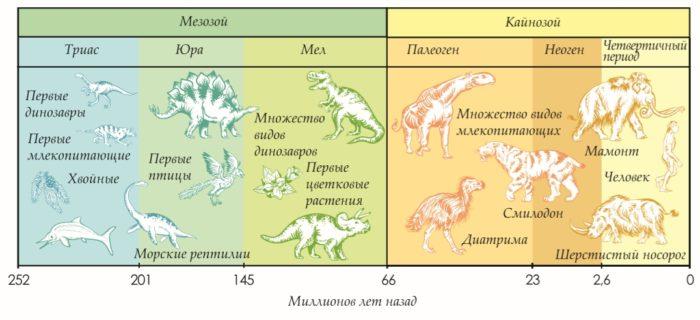 Геохронологическая шкала эволюции живых организмов