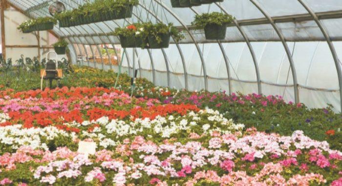 Цветы под искусственной защитой
