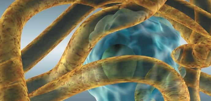 Мицелий гриба атакует человеческую клетку