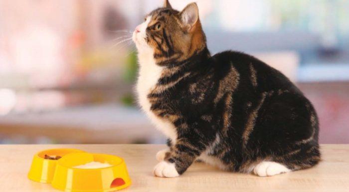 кошка хочет есть