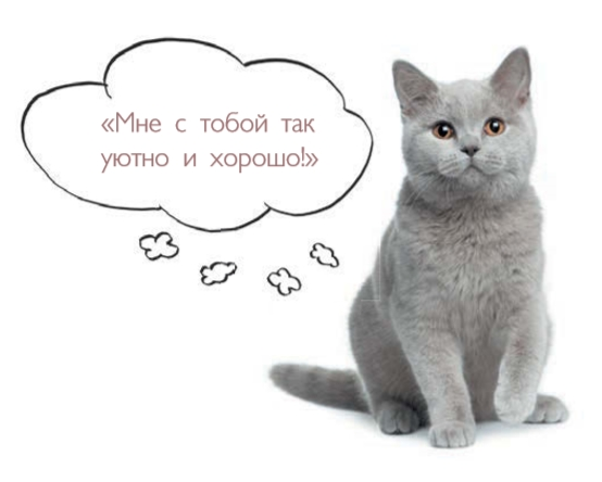Как понять кошку