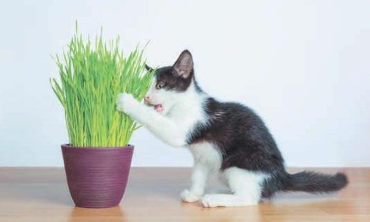 растение и кошка