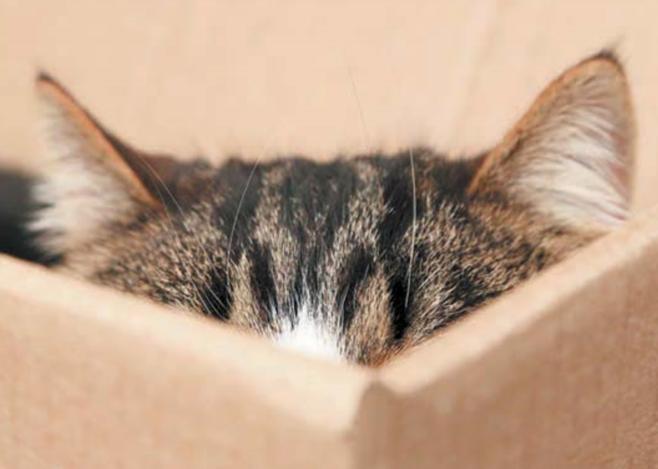 кошка спряталась