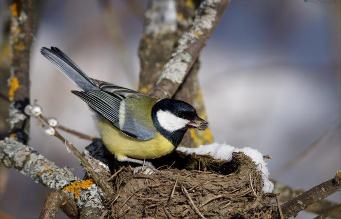 Интересно о птицах