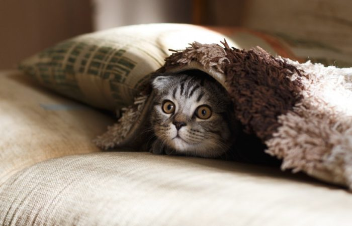 Интересно о кошках