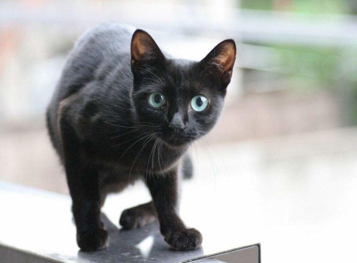 Кошки экстрасенсы