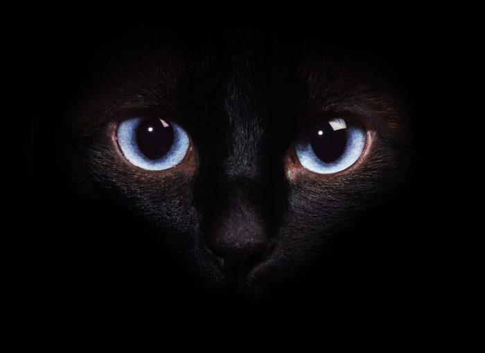 кошки в темноте