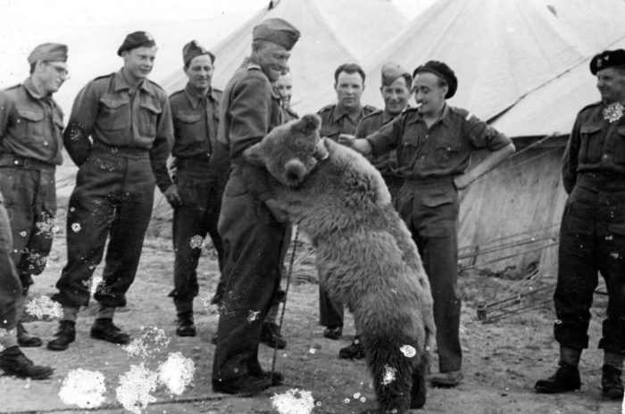 Медведь-солдат