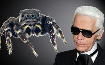 новый вид паука