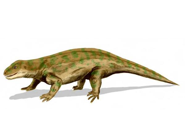Представитель котилозавров, диадект