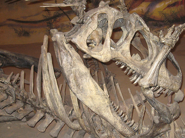 Древние кости динозавра
