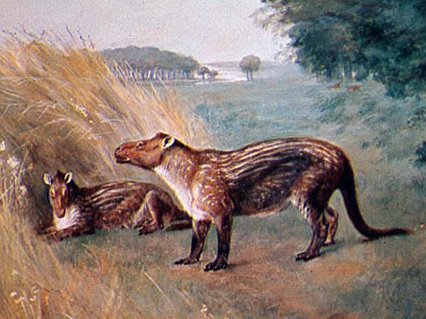 Рисунок древних животных кондилартров