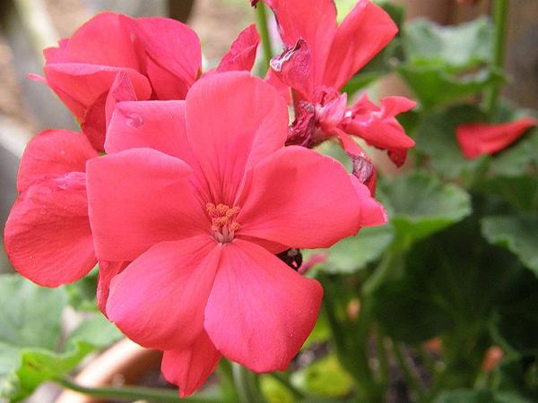 Цветы относят к царству растений