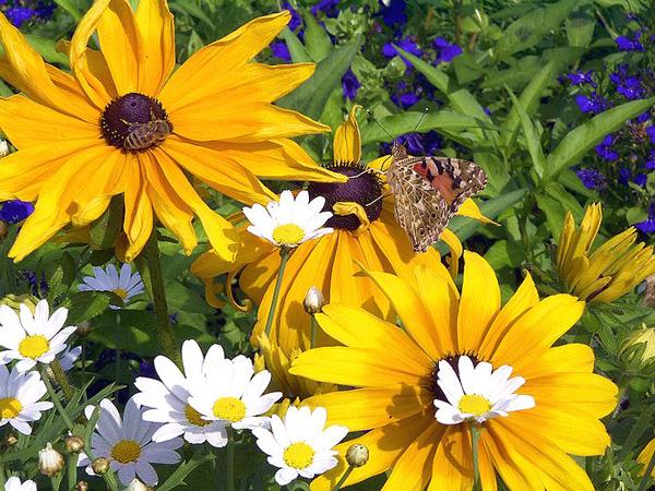 Цветы привлекательны для насекомых